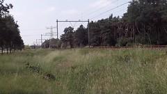 Wow ! The Railpromo 1215 with Empty Auto Train at Blerick, the Netherlands, June 7,2016 (Treinemanke) Tags: railpromo 1215 class1200 serie1200 empty autotrain auto train freighttrain special trains specialtrain speciale trein sonderzug sonder zug transfer run ride