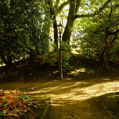 Autumn morning light (S.R.Murphy) Tags: october2018 york yorkshire fujifilmx100t photoshop oilpaintfilter lightroomcc autumn autumncolours autumncolors sunshine wood woods tree morninglight morningsunshine trail park