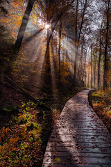 Mullerthal (Jan Hoogendoorn) Tags: luxembourg luxemburg mullerthal bos forest pad path bomen trees zon sun stralen rays
