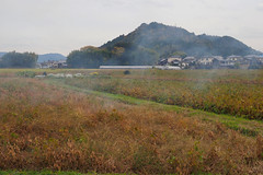 Smoke over soybean fields (Greg Peterson in Japan) Tags: 大豆 mountains 植物 shiga soybeans 栗東市 plants 滋賀県 japan ritto nikkouyama 日向山 shigaprefecture