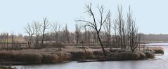 Waving reeds (roland_tempels) Tags: supershot reed kruibeke belgium riet water landscape polder naturereserve flowers reeds