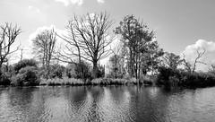 0664-2  Ufer der Hohensaaten-Friedrichsthaler Wasserstraße, die durch den Nationalpark Unteres Odertal führt. Abgestorbene Bäume stehen im Wasser, Schilf und Sträucher bilden ein dichtes Gestrüpp. (stadt + land) Tags: abgestorbene bäume wasser schilf sträucher hohensaaten friedrichsthaler wasserstrase kanal bundeswasserstrase schifffahrtskanal odertal oder schifffahrt verbindung berlin stettin binnenschifffahrt nationalpark grenze grenzgebiet polen deutschland polder landschaft flussgebiet winterdeiche flusstal fluss auenlandschaft lebensraum pflanzen tiere zugvögel bilder fotos fotografien impressionen bootsfahrt chrstoph bellin