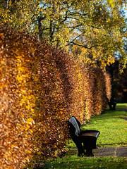 Two seats in autumn sun (leistus) Tags: kingsnorton urban kingsnortonpark olympusome5ii olympus75f18 autumnmorning goldenhour