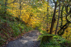 SJ1_2861 - Woodland trail (SWJuk) Tags: hebdenbridge england unitedkingdom swjuk uk gb britain yorkshire westyorkshire calderdale hardcastlecrags trail track path footpath trees leaves foliage grass 2018 oct2018 autumn autumnal autumncolours colourful nikon d7200 nikond7200 nikkor1755mmf28 rawnef lightroomclassiccc