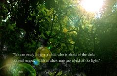 Plato quotes (YU-bin) Tags: forgiveachild nature afraidofthelight real tragedyoflife plato quotation quote foliage tree leafs