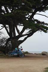 IMG_10940 (mudsharkalex) Tags: california pacificgrove pacificgroveca loverspointpark
