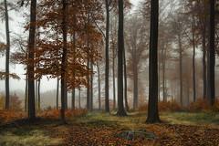 Autumn (Tony N.) Tags: belgique belgium bruxelles brussels forêt forest automne autumn foretdesoignes soignes overijse jesuseik belgie nisi nisiprov5 nisicplpro nisignd8 vanguard d810 nikkor1635f4 tonyn tonynunkovics brume fog brouillard arbre arbres tree trees bois wood