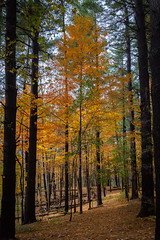 Walk through the Forest - EXPLORED #40 12/6/2018 (Bruce Bugbee) Tags: tipton michigan unitedstates us fall autumn colors forest trees woods leaves yellow nikon d7200