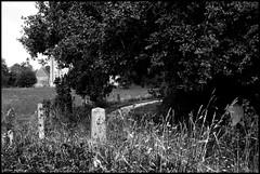 Nauvay (Sarthe) (gondardphilippe) Tags: nauvay sarthe maine paysdelaloire noiretblanc noir nb blanc blackandwhite bw black white arbres campagne champ extérieur field graphique herbes haie chemin landscape monochrome macro nature outdoor ombre paysage patrimoine quiet rural ruralité texture zen