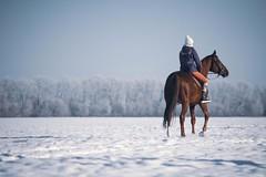 #horse #horses #russia #winter #snow #просторы #россия #поле #снег #зима (jose6210) Tags: horse просторы russia снег snow поле winter россия horses зима