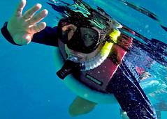 freeze 026 (sedonabiscuitblue) Tags: gopro big island hawaii snorkeling captain cook screen captures