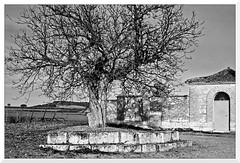 Invierno (Pablo M.B.) Tags: invierno winter hiver tél paisaje paisage paysage landscape táj árbol arbre tree fa bn bw