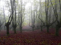 Una mañana de niebla (azucena G. De Salazar) Tags: bosque forest basoa euskalherria euskadi basquecountry paisvasco hayedo urkiola parquenaturalurkiola