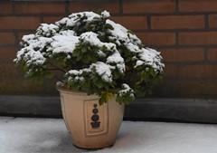 16.12.18. Eerste bescheiden laagje sneeuw (rspeur) Tags: almere thenetherlands winter