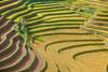 _J5K2315.0918.La Pán Tẩn.Mù Cang Chải.Yên Bái. (hoanglongphoto) Tags: asia asian vietnam northvietnam northwastvietnam landscape scenery vietnamlandscape vietnamscenery vietnamscene terraces terracedfields seasonharvest sunlight sunny morning sunnymorning hillside tree house home hdr canon canoneos1dsmarkiii canonef70200mmf28lisiiusm mucangchailandscape tâybắc yênbái mùcangchải lapántẩn ruộngbậcthang sườnđồi buổisáng nắng nắngsớm ngôinhà cây mùcangchảimùalúachín mùcangchảimùagặt curve abstract đườngcong trừutượng