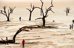 Weird And Wonderful (Alan1954) Tags: namibia africa holiday 2018 deadvlei namibdesert