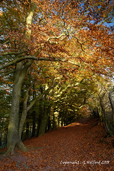 Autumn Colour (Holfo) Tags: autumn clenthills worcestershire colour red rich nikon d750 trees leaves branches england uk britain path leafstrewn arched arch tree park