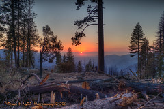 Fire Scarred Sunset (Michael F. Nyiri) Tags: forest yosemitenationalpark sunset trees california northerncalifornia greaterphotographers greatestphotographers