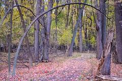 Fall Archway (kirsten.eide) Tags: landscape nikon wisconsin autumn trees fall