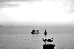 000869 (la_imagen) Tags: sw bw blackandwhite siyahbeyaz monochrome seagull bodensee laimagen lakeconstanze lagodiconstanza lagodeconstanza friedrichshafen mood lake ferryboat ferry