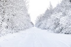 winter wonderland in Lithuania (Zygios) Tags: tree snow sky road lithuania lithiuania lietuva ziema winter nikon d610 nature landscape wintermood forest cold baltics natue exploring nikonflickraward flickrestrellas