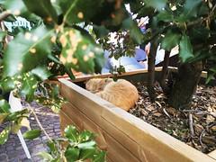 Agrilab Wine Tasting Tour (Barolo, Langhe (Alessia.Malachiti) Tags: langhe piemonte piedmont wine vino barolo roddino cuneo