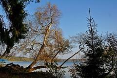 2014-10-10 Białoruś - jezioro Świteź (24) (aknad0) Tags: białoruś jezioroświteź krajobraz jeziora las drzewa
