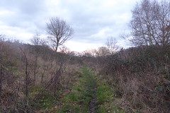 Old railway trackbed between Athersley and Carlton, Barnsley. (former Carlton branch line)   January 2019 (dave_attrill) Tags: cutting athersley north branch carlton disused railway line trackbed remains abandoned footpath barnsley southyorkshire yorkshire grass trees overgrowth vegetation january 2019