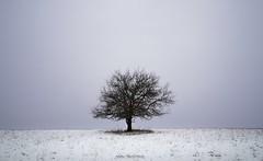 tree (svecky86) Tags: