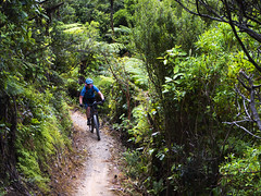 Missing Link (Wozza_NZ) Tags: karori missinglink makara malkarapeak makarapeakmountainbikepark wellington newzealand singletrack bush ride cycle mountainbike mtb