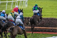 DSC_0897 (fullerton42) Tags: straftford racecourse stratfordracecourse horse horses racehorse horseracing race punter punters specatators sport equine england