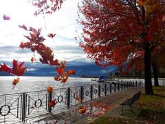 Il rosso è la cura definitiva per la tristezza. (illyphoto) Tags: photoilariaprovenzi sweetnovember november autumn autunno red rosso comolake lakecomo lagodicomo