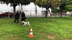 IMG_8486 (Doggy Puppins) Tags: educación canina adiestramiento canino perro dog