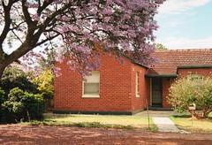 Spring in Adelaide's suburbs (JFP93) Tags: jacaranda bloom spring adelaide cumberland park