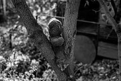 (Feininger's Cat (Thanks for 1.3 million views!)) Tags: leicam8 leica summaritm50mmf24 blackandwhite abandoned 85mmffequiv street apsh leicasummaritm12450 summarit summarit50 50mm leicam rangefinder messsucher ccdsensor