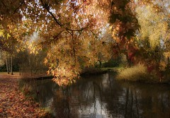 The lake ... (Julie Greg .. Holiday 13/12 - 31/12 2018) Tags: lake park river tree trees water colours canon leaves nature nautre light soft leedscastle england kent