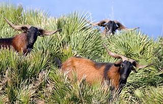 Spain Luxury BG Hunt 34