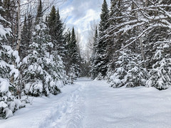 1:52 - Getting Out (LostOne1000) Tags: nature iphone seasons trees pine winter plants iphone8 photography camera equipment week1 52weeks weather freshsnow snow lanse michigan unitedstates us