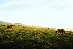 •Horses• - - - #horse #horses #nature #basquecountry #iberianwild #roamtheplanet #folkgreen #landscape #landscapephotography #wildanimals #canon_photos #canon #canon750d #total_euskadi #earthpix #travelphotography #love #total_spain #euskadi #spain #sunse (andermatas) Tags: ifttt instagram •horses• horse horses nature basquecountry iberianwild roamtheplanet folkgreen landscape landscapephotography wildanimals canonphotos canon canon750d totaleuskadi earthpix travelphotography love totalspain euskadi spain sunset jaizkibel green travelgram mountains calm naturelovers dawn folk sky