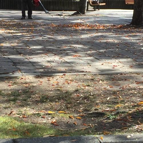 枯れ葉の掃除