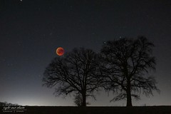 Bood moon 2019 - Composing (Light and shade by Monika) Tags: bloodmoon moon fullmoon münsterland nature silence nightscape wonder composing