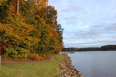 Autumn splendor 🍁 (Sam0hsong) Tags: autumnleaves northcarolina