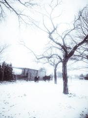 Anglų lietuvių žodynas. Žodis snow-blinded reiškia sniego-aklas lietuviškai.