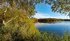 Le Deuil de la Nature (Ciceruacchio) Tags: automne autumn autunno nature natura lamartine poème poem poesia lagune lagoon laguna eau water acqua hourtin nouvelleaquitaine france francia frankreich nikond750