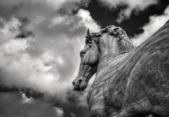 SPQR (Svendborgphoto) Tags: art rome sculpture horse monochrome bw bokeh blackandwhite dof detail svendborgphoto sonya7ii sonyalpha sel2870 70mm italy old clouds