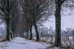 In heavy sleet - Im Schneeregen (ralfkai41) Tags: schnee landscape winter nature outdoor allee natur snow bäume alley trail windy windig weg wind snowy trees landschaft snowing schneetreiben schneeregen sleet