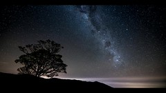 les makes (Francis Nicolle) Tags: iledelaréunion milkyway timelapse nature arbre ciel stars sky lesmakes