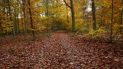 What do people do on a day off in fall? (Spotmatix) Tags: belgium fall forest landscape namur nature places profondeville seasons trees