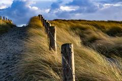 storm motion (Wöwwesch) Tags: dunes storm clouds fence sand wind move coast gras grasses way wath sky cold winter beach walk alone
