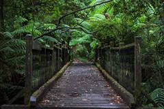 IMG_9808 (sarnovphoto) Tags: dandenong dandenongranges olinda sassafras rainforest trees canon canon60d lake water roadtrip victoria